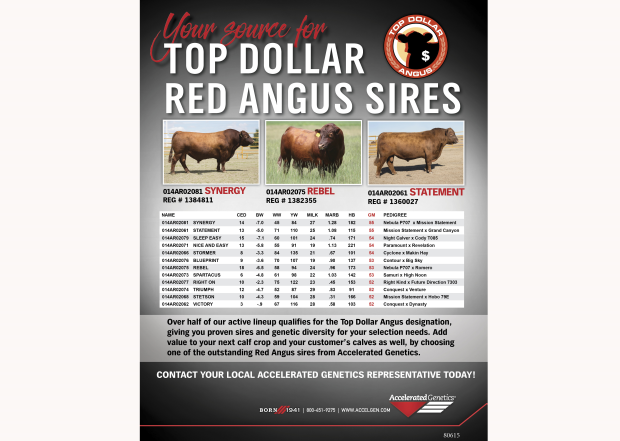 Top Dollar Red Angus Sires