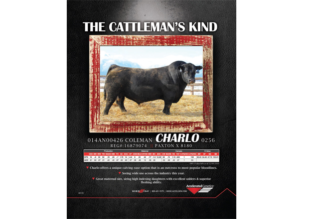The Cattleman's Kind