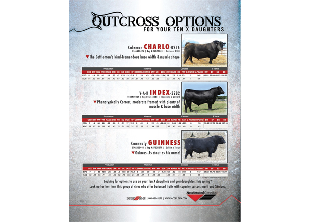 Outcross Options for Your Ten X Daughters