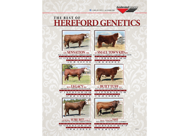 The Best of HEREFORD GENETICS