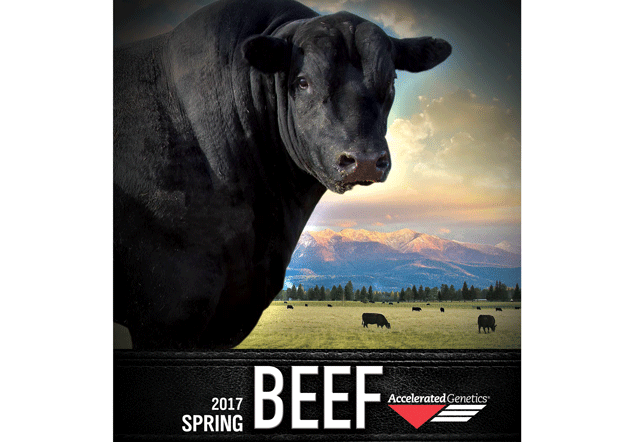 2017 Beef Sire Directory
